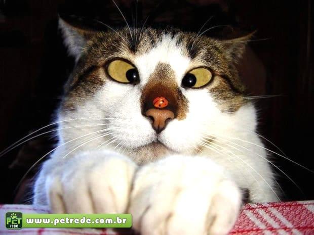 Por que os gatos agem de maneira tão aleatória?
