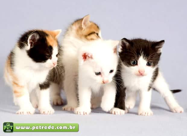 A saúde dos gatos