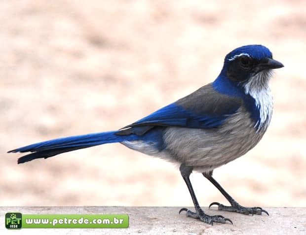 Algumas espécies de pássaros realizam funerais