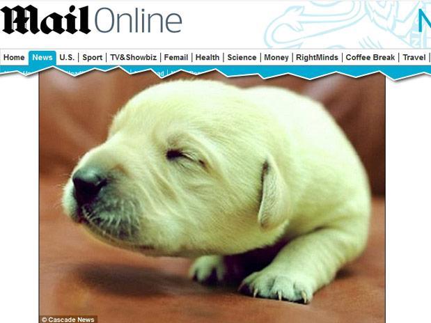 Com condição rara, cachorro nasce com coloração verde na Inglaterra