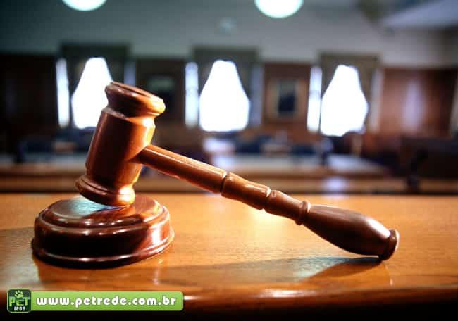 Brasileira vai à Justiça para reaver papagaio