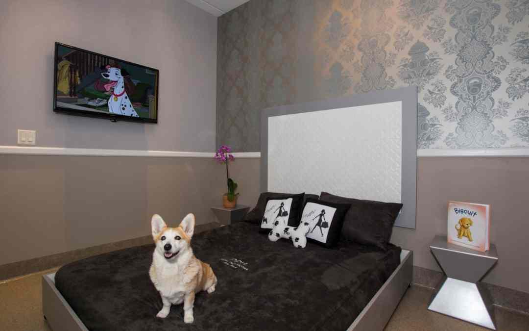 Hotéis americanos oferecem luxo extravagante para cachorros