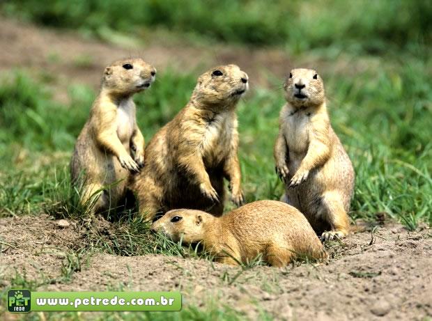 A comunicação e a inteligência de animais que vivem em bando