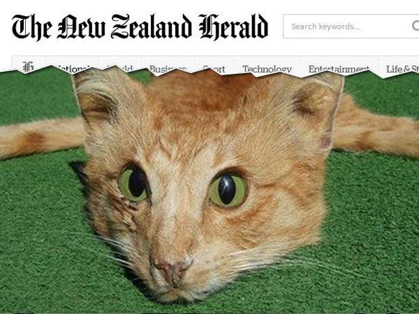 tapete-gato-morto-nova-zelandia