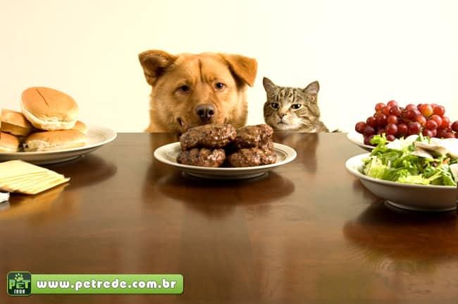 Por que? Mudar o cão ou gato de comida caseira para ração
