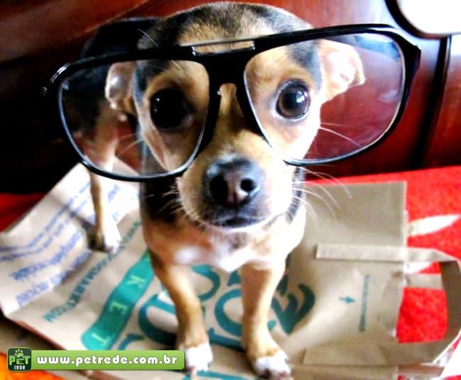 cachorro-filhote-oculos-petrede