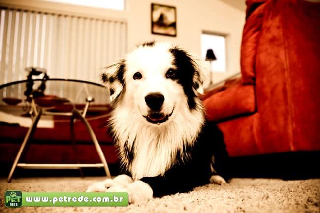 Animais em condomínios exigem cuidados