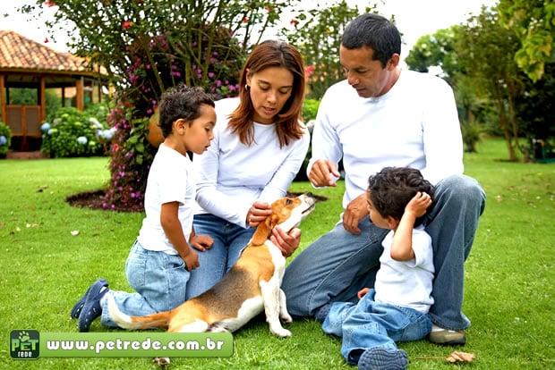 Cuidados com animais de estimação podem evitar doenças