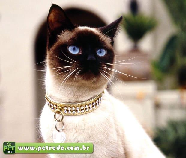 gato-siames-colar-joia-luxo-petrede