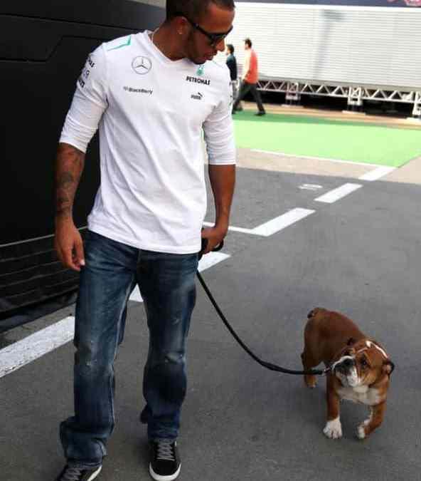 Hamilton passeia com cachorro que tem credencial VIP na F1
