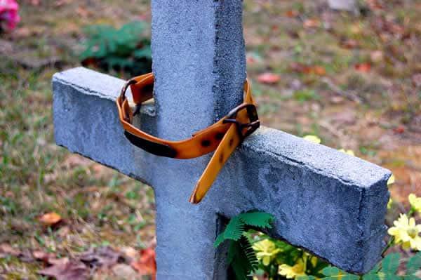 SP: vereadores querem permitir enterro de animais em cemitérios públicos