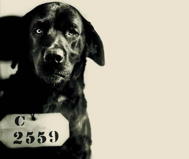 Cachorro mata gato e é condenado à prisão perpétua nos Estados Unidos