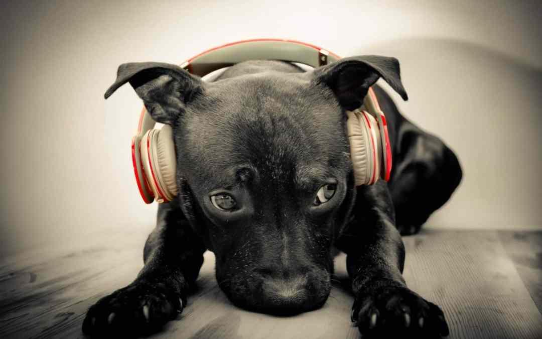 Use a música clássica para acalmar o seu cachorro