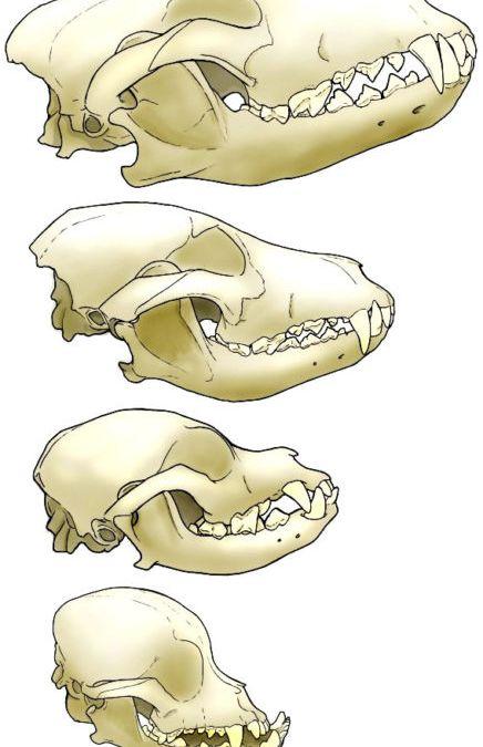 Como transformamos um predador em uma criatura dócil em poucos milhares de anos