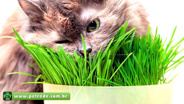 Conheça 5 curiosidades sobre a Erva do Gato (Catnip)
