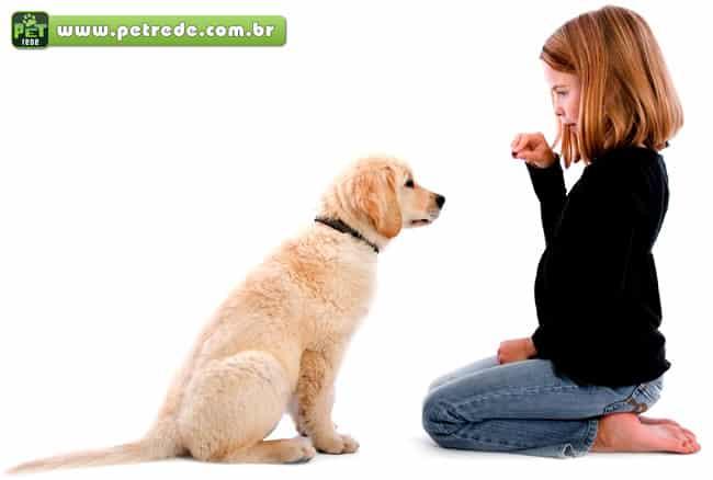 Escolas para cachorro ajudam a adestrar e divertir os pets