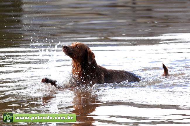 cachorro-nadando-enchente-chuvas-alagamento-petrede