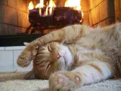 gato-inverno-frio-domrindo-descansar-petrede