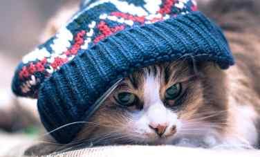 gato-inverno-frio-petrede