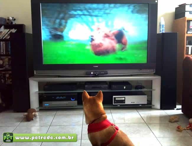DogTV, Televisão de Cachorro