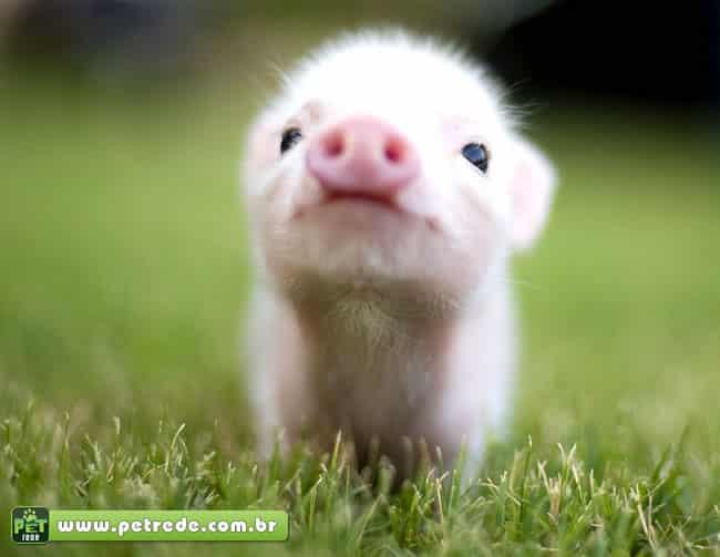 Casal vive com dois porcos de estimação em apartamento na Alemanha
