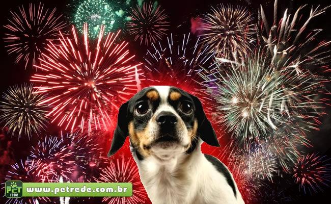 cachorro-filhote-medo-fogos-artificio-rojao-petrede