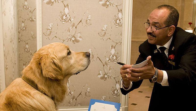 Hotel de luxo para cachorros será inaugurado em Nova York