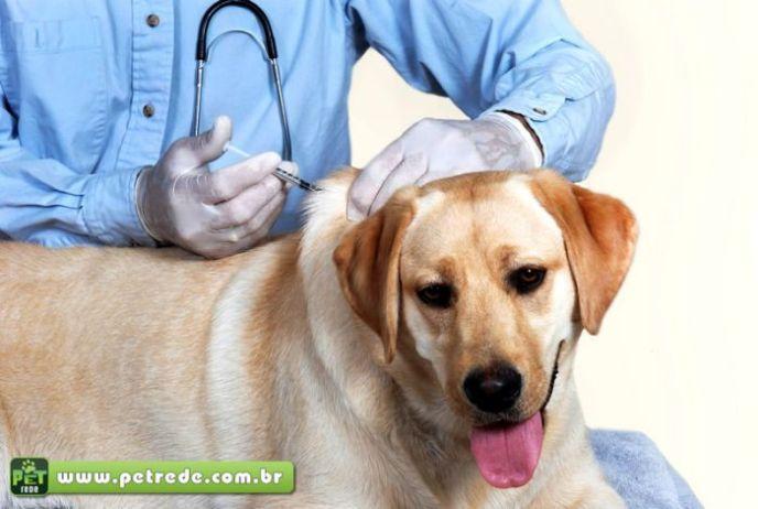 cachorro-injecao-vacina-remedio-tratamento-cuidados-petrede