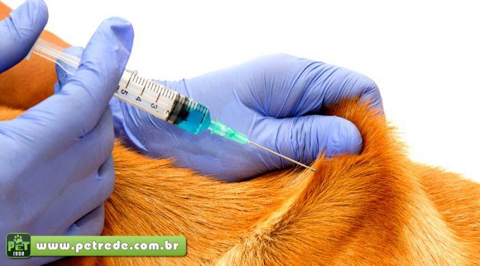 cachorro-vacina-injecao-remedio-tratamento-cuidados-petrede