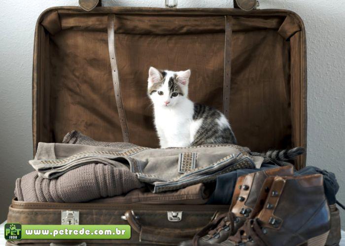 gato-filhote-viagem-ferias-mala-petrede