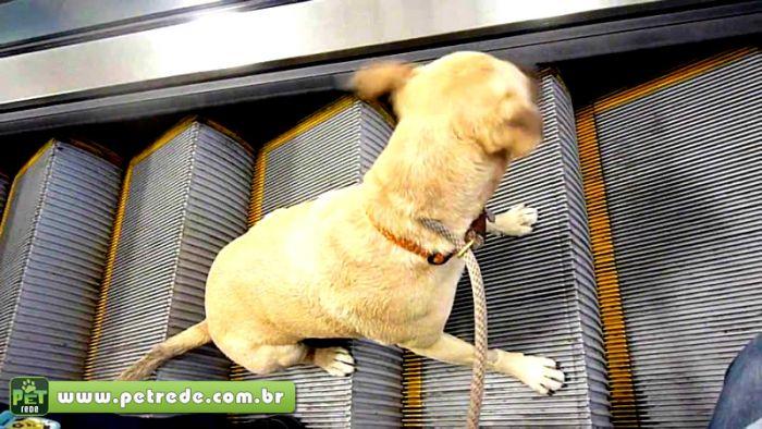 cachorro-cuidado-escada-rolante-perigo-seguranca-petrede