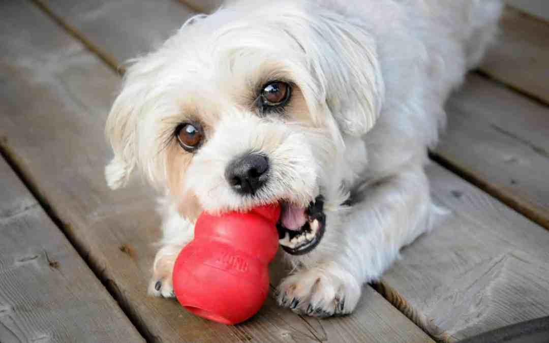 5 motivos para incentivar os cães a destruírem seus próprios brinquedos