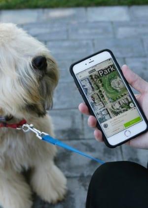 Dispositivo promete achar o seu animal de estimação onde quer que esteja