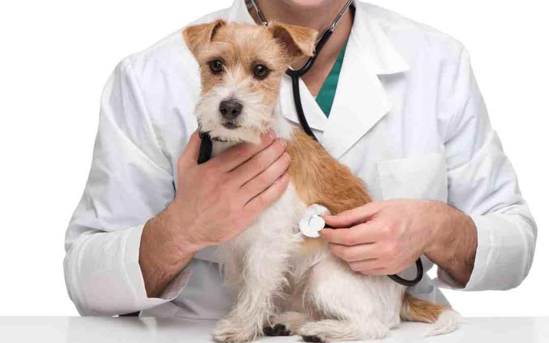 Tireóide, problema também para os animais