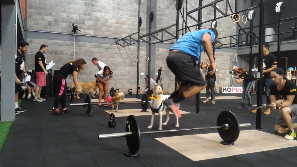 Você já pensou em praticar atividades físicas junto com o seu cão?