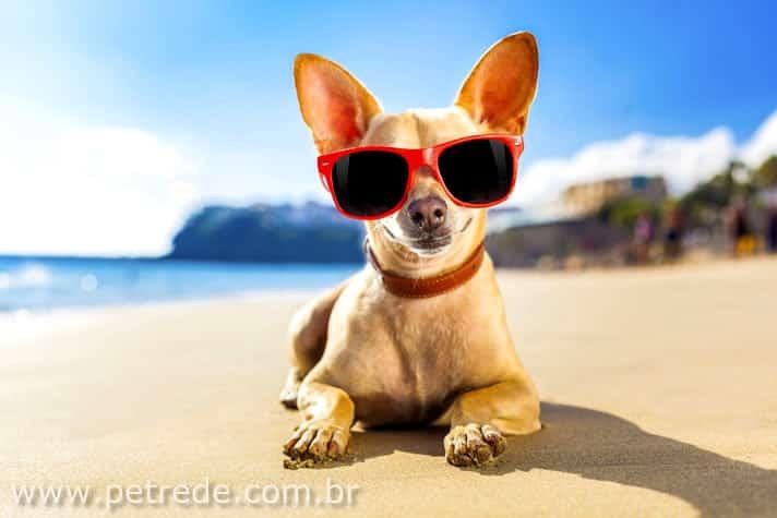 Clima mais quente e viagens de verão demandam cuidados especiais com os animais de companhia