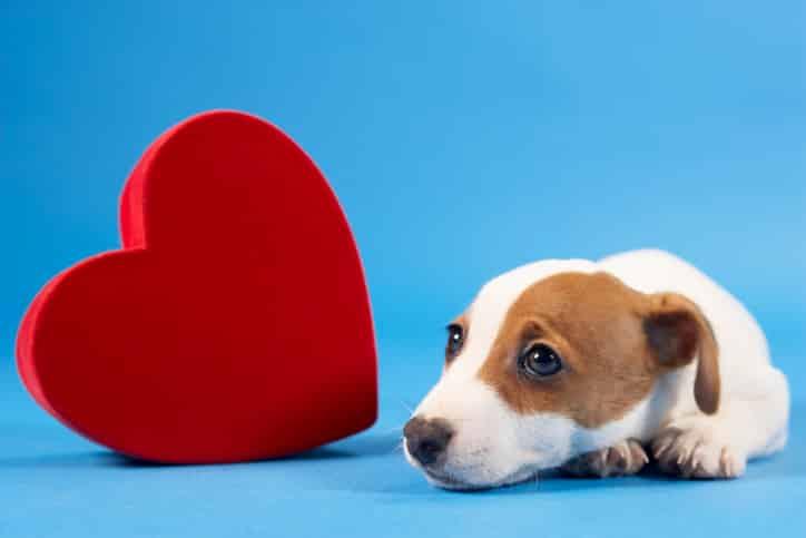 """Merial alerta para prevenção do """"Verme do Coração"""", doença comum nesta época do ano"""