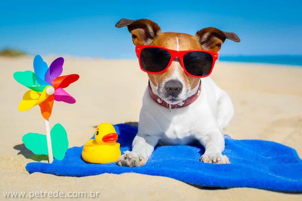 Ajude o seu pet a passar bem o verão, evite a micose