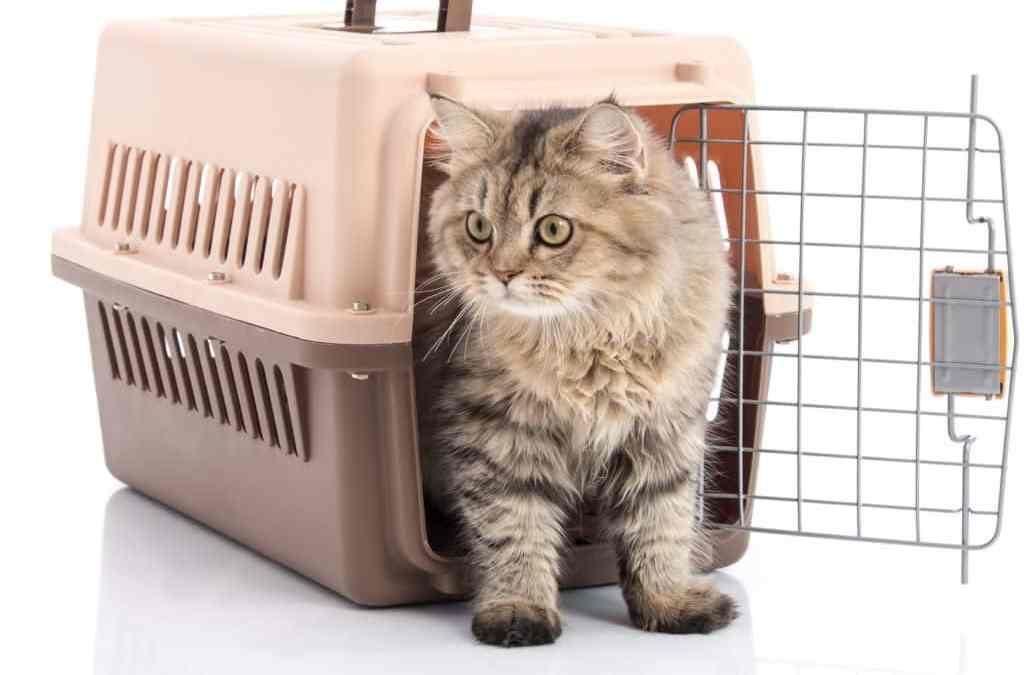 Dicas para transportar Gatos sem estresse