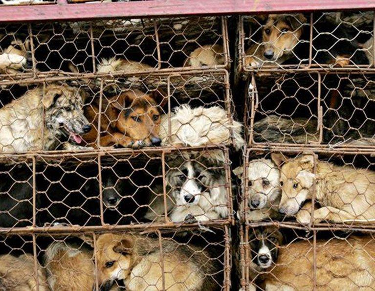 Taiwan surpreende e proíbe o consumo de carnes de cachorro e gato