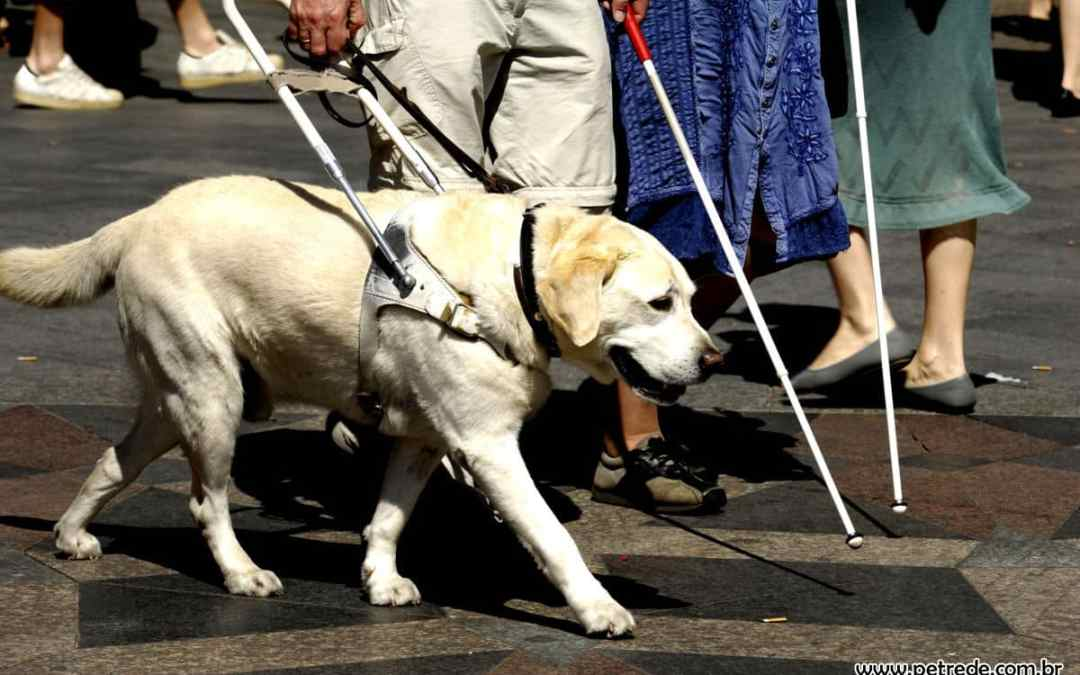 Hercosul Alimentos e Instituto IRIS se unem em campanha para treinamento de cães-guias