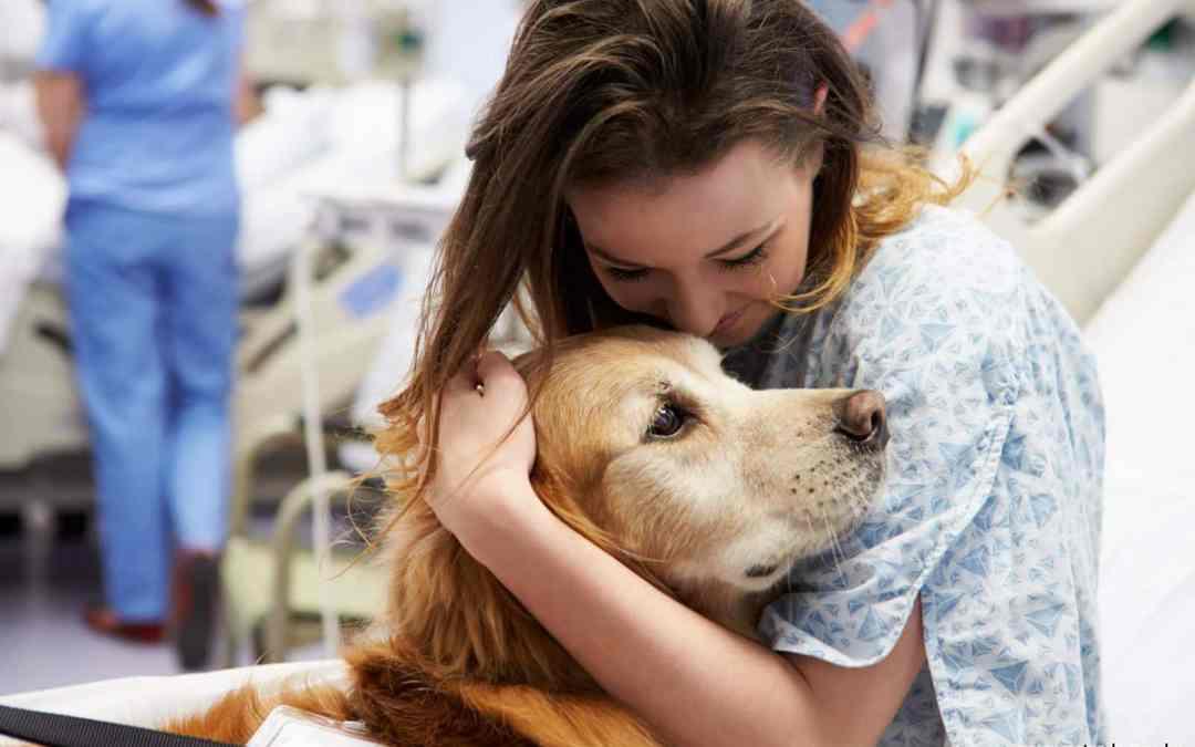 Cães são usados em terapias por hospitais