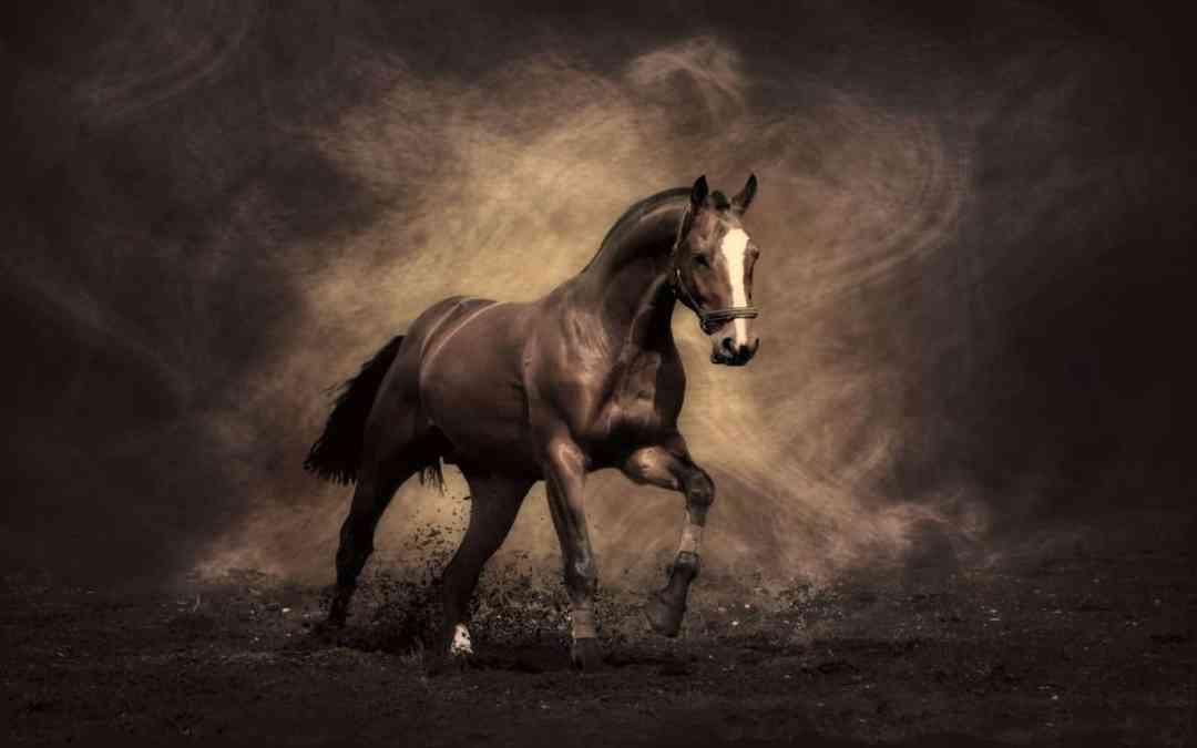 Cavalos com alimentação inadequada  estão mais propensos às doenças