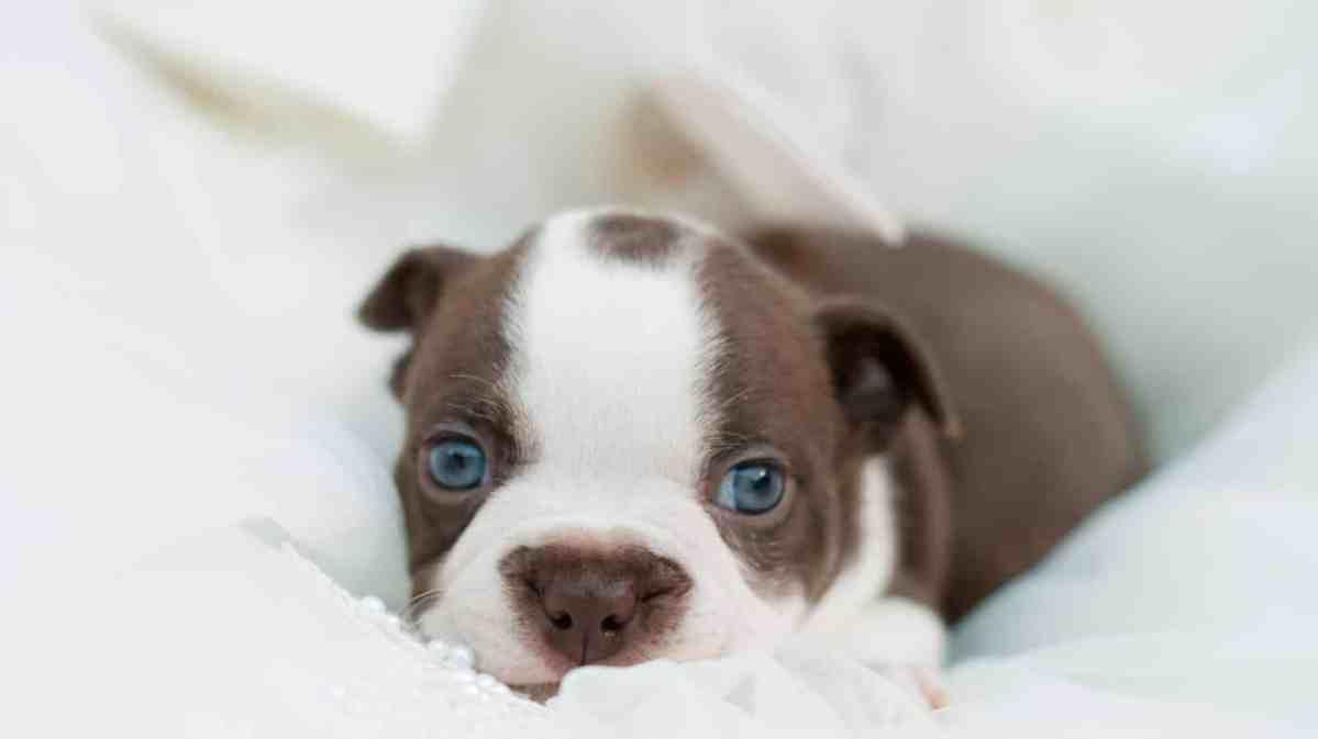 Como cuidar de filhote de cachorro com 45 dias