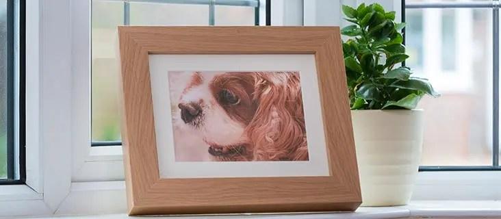 Pet Photo Memorials