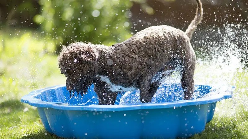 how to keep your dog cool in summer hot weather