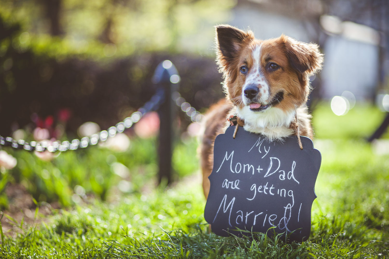 Cute dog wearing wedding announcement sign.