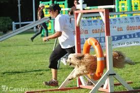 activité sportive pour chien