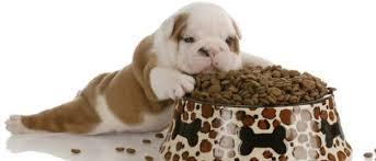 alimentation chien et molosses