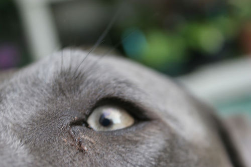 Why Does My Dog Have Mucus in His Eyes?